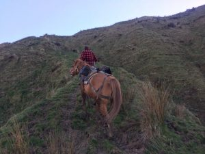 When the land's too challenging for the quad bike, horseback can be the best option